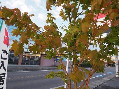 ブログ:秋がきた(^^♪