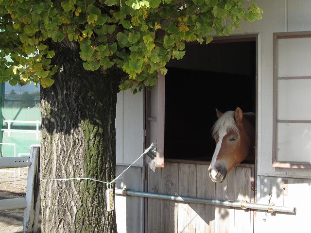 高崎乗馬クラブ