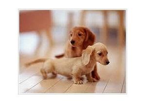 小型犬二匹までOK♪