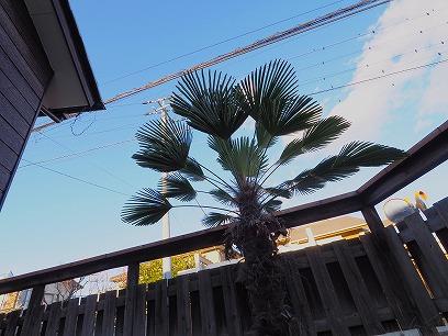 植栽も空に映えますねっ